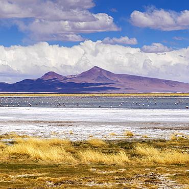 Tara Salt Flat, Salar De Atacama, San Pedro De Atacama, Antofagasta Region, Chile