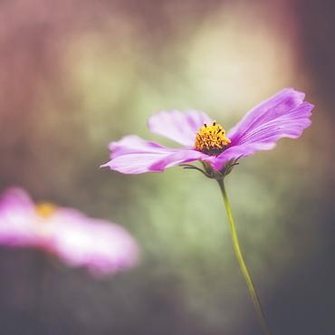 A Delicate Flower In The Jerusalem Botanical Garden, Jerusalem, Israel