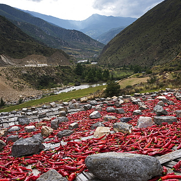 Red Peppers Laid Out To Dry, Thimphu, Bhutan
