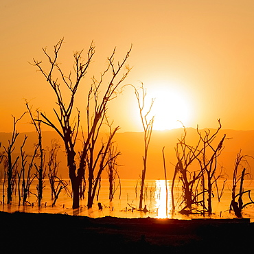 A Line Of Dead Trees In A Lake Silhouetted Against The Rising Sun, Low Hills Beneath An Orange Sky In The Background, Nakuru, Kenya