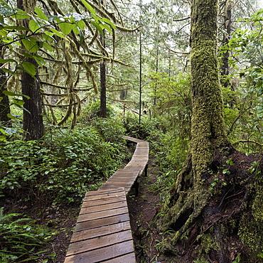 Winding Boardwalk Through Forest, British Columbia, Canada
