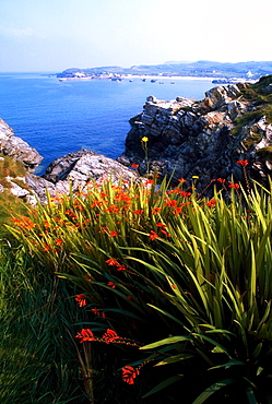Monbretia Wildflowers And Port Na Blagh, Co Donegal, Ireland