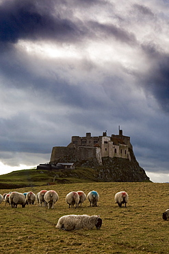 Holy Island Of Lindisfarne, Lindisfarne Castle, Near Berwick-Upon-Tweed, Northumberland, England
