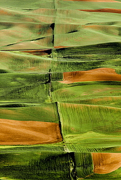 Palouse Fields, Whitman County, Washington, Usa