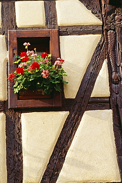 Geraniums In Window Of Half-Timbered House