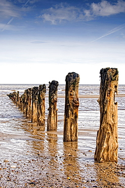 Remnants Of Mooring Posts, Humberside, England