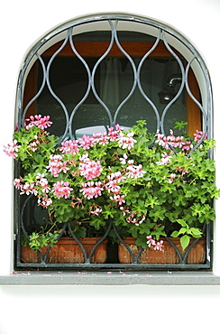 Pink Flowers In A Window