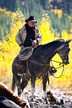 Cowboy On His Horse With His Dog, Alberta, Canada