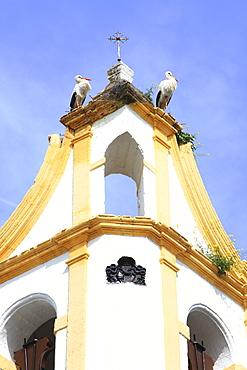 Storks On The Church Tower, Chiclana De La Frontera, Andalucia, Spain