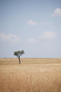 Savannah, Kenya, Africa