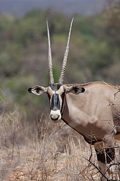 Onyx, Kenya, Africa