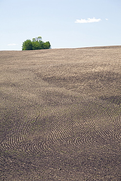 Seeding Patterns In Soil, Central Alberta, Canada