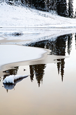 Washington, United States Of America, Snow Around Tipsoo Lake In Mt. Rainier National Park