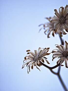 Flowers On A Stem Against A Blue Sky