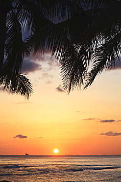 Glowing sunset with silhouette of palm fronds on the shore, Honolulu hawaii united states of america