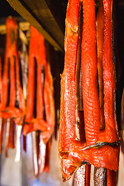 Sockeye salmon from the kvichak river that has been stripped and hung to dry and smoke hang in a large smokehouse, Igiugig bristol bay alaska united states of america