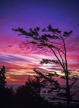 The Sun Sets Near Cape Perpetua, Yachats, Oregon, United States Of America