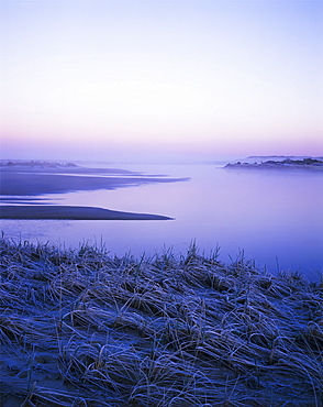 Frost Coats The Beach Grass On The Salt Marsh, Florence, Oregon, United States Of America