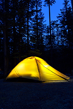 Tent In The Woods At Night Glowing With Deep Dark Blue Sky, Lake Louise, Alberta, Canada