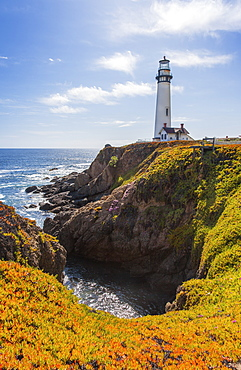 Pigeon Point Lighthouse And Blooming Ice Plant In The Foreground On The Cliffs, California, United States Of America