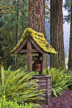 Water Well, Olympic National Forest, Washington, United States Of America