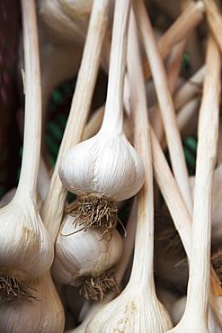 Large Clean Organically Grown Hardneck Garlic Bulbs, Ontario, Canada