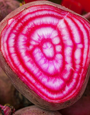 Chiogga Beet Cut In Half To Reveal The Red And White Candy-Stripes, Toronto, Ontario, Canada