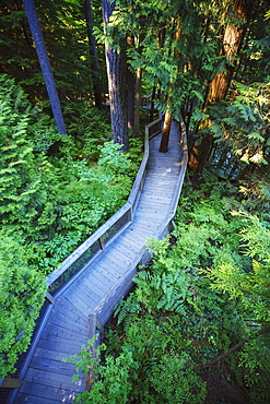 Trail In The Forest At The Capilano Suspension Bridge, Vancouver, British Columbia, Canada