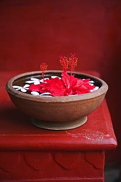 Flowers Floating In Water In A Bowl, Ulpotha, Embogama, Sri Lanka