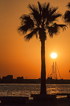 Silhouette Of Sailboat Masts, Building And A Palm Tree In The Harbour, Paphos, Cyprus