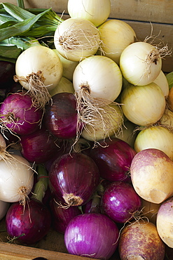 Onions And Turnips At A Roadside Stand, Dunham, Quebec, Canada