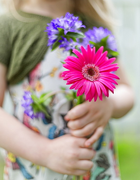 A Young Girl Holding Bright Colourful Cut Flowers, Surrey, British Columbia, Canada