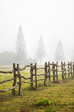 A Remote Foggy Pasture At Koele, Lanai, Hawaii, United States Of America