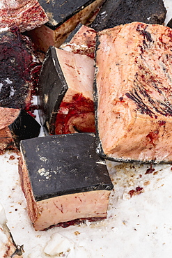 Close Up Of Chunks Of Bowhead Whale Meat On The Frozen Sea Ice, Barrow, North Slope, Arctic Alaska, USA, Winter