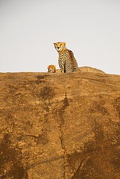 Female Cheetah (Acinonyx Jubatus) And Small Cub Peer From Rock Outcrop, Serengeti National Park, Tanzania