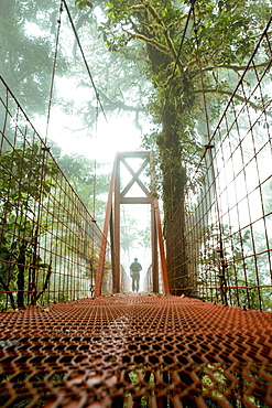 Man On A Bridge, Monteverde Cloud Forest Reserve, Monteverde, Costa Rica