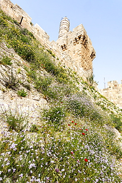 David's Citadel And Wildflowers Growing On The Sloped Hillside, Jerusalem, Israel