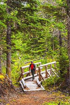A Man Hiking Across A Log Bridge On The Turnagain Pass Trail In The Chugach National Forest, South-Central Alaska, Alaska, United States Of America