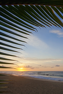 A coconut palm frond silhouette framing a beautiful sunrise at the beach on the North shore of Oahu, Honolulu, Oahu, Hawaii, United States of America