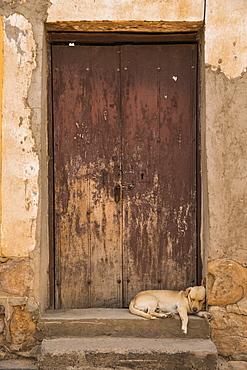 Puppy Sleeping In An Old Doorway, Tarata, Bolivia