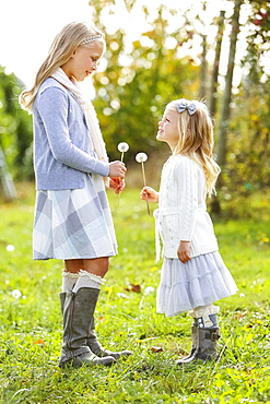 Two Young Girls Standing Facing One Another And Holding Dandelion Seed Heads, Washington, United States Of America