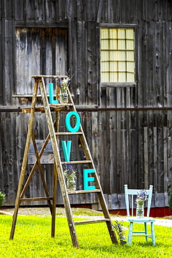 "Wooden Ladder On Grassy Lawn With ""l O V E"" Letters Placed On Steps With Old Rustic Wooden Barn In The Background And Old Wooden Painted Chair, Walters Fall, Ontario, Canada"