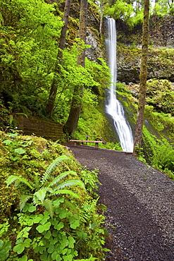 Winter Falls In Silver Falls State Park; Oregon, USA