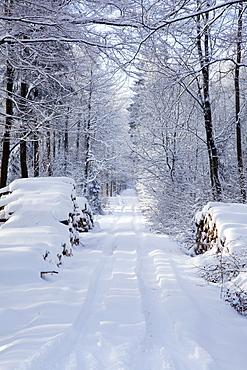 Snowy Lane; Westerwald Rhineland-Palatinate Germany