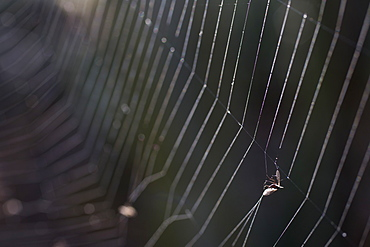 Fly trapped in spider web