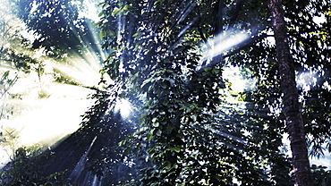 Directly below shot of sunlight streaming through trees