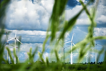 Wind turbines with blades of grass in foreground, schleswig-holstein, germany