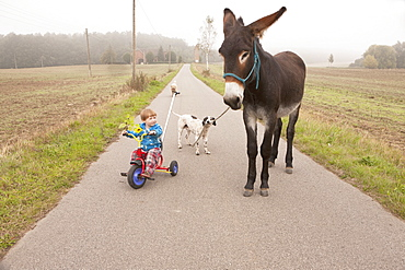 Girl riding tricycle with donkey and dog on rural road