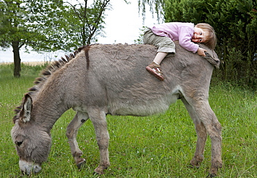 Cute girl laying on donkey in field