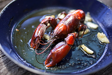 Freshwater yabby (cherax destructor) cooked in oil with garlic